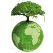 Dissertation environmental